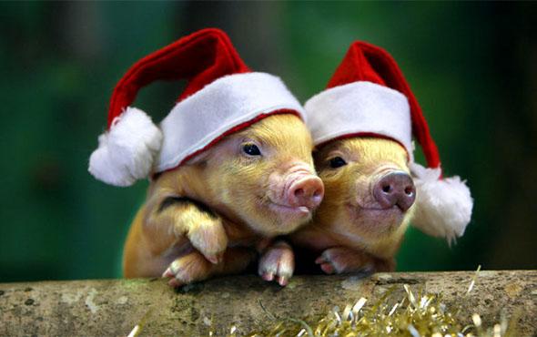 Поделка Свинья из соленого теста: оригинальный подарок на Новый год 2019 simvol 2019 goda zheltaya svinya svoimi rukami