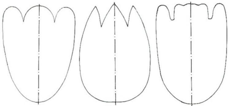 Как сделать тюльпаны своими руками: мастер классы в различных техниках Tyulpan iz bumagi 37