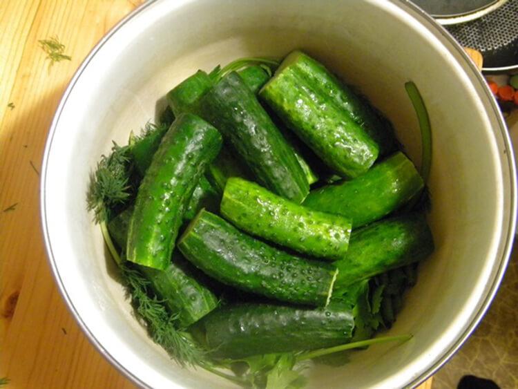 Малосольные огурцы в кастрюле: быстрые и вкусные рецепты malosolnye ogurcy v banke 17