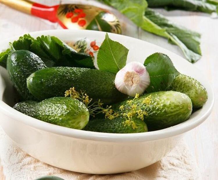 Малосольные огурцы в кастрюле: быстрые и вкусные рецепты malosolnye ogurcy v kastryule 1