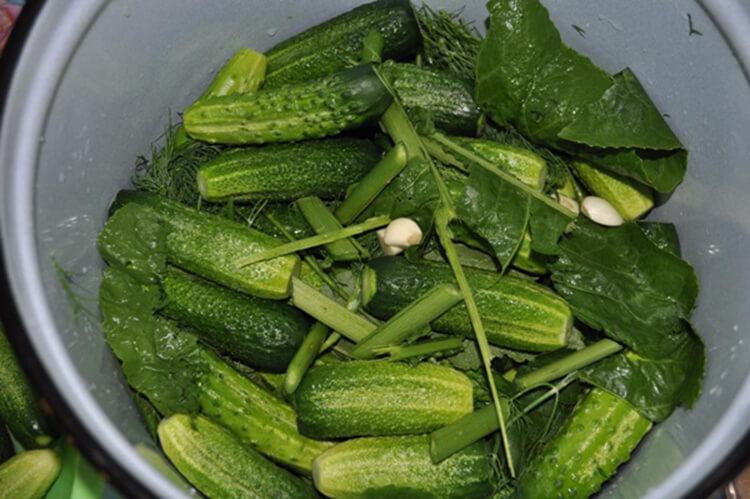 Малосольные огурцы в кастрюле: быстрые и вкусные рецепты malosolnye ogurcy v kastryule 21