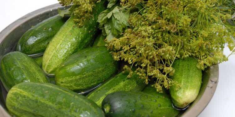 Малосольные огурцы в кастрюле: быстрые и вкусные рецепты malosolnye ogurcy v kastryule 5