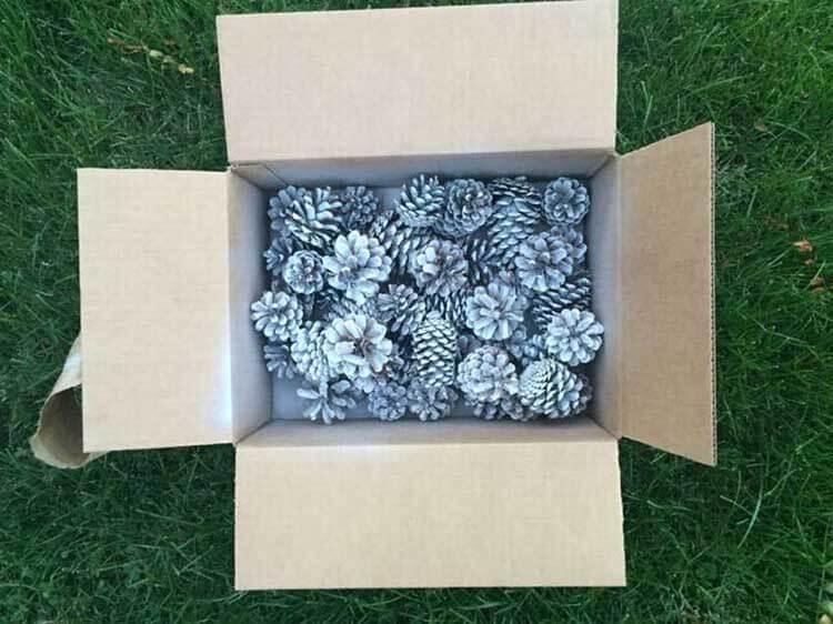 Красивые поделки из сосновых шишек для дома и садика podelki iz sosnovyh shishek 5