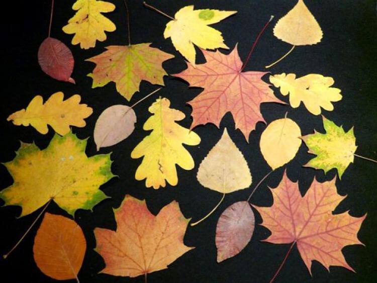 Что можно сделать из сухих осенних листьев: варианты с фото podelki s detkami iz suhih list ev 11
