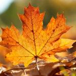 Что можно сделать из сухих осенних листьев: варианты с фото