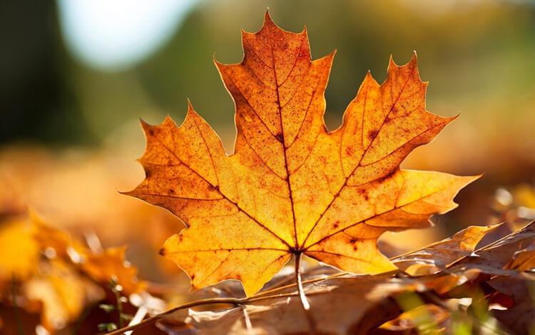 Что можно сделать из сухих осенних листьев: варианты с фото podelki s detkami iz suhih list ev 19