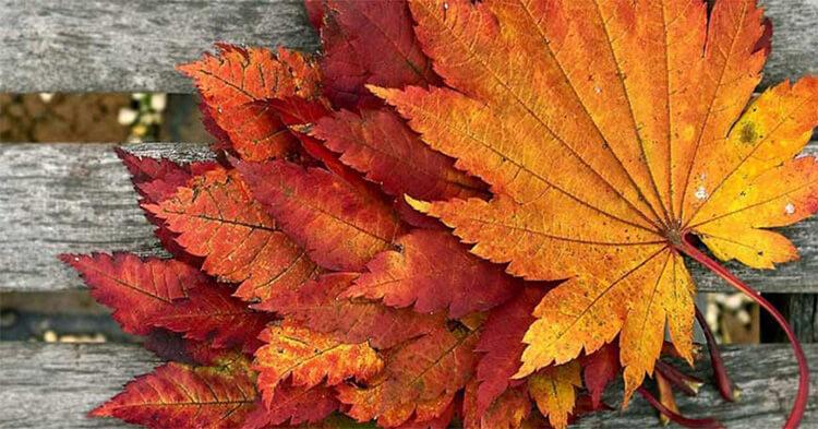 Аппликации из листьев на тему Осень: интересные поделки с фото applikacii iz listev 68