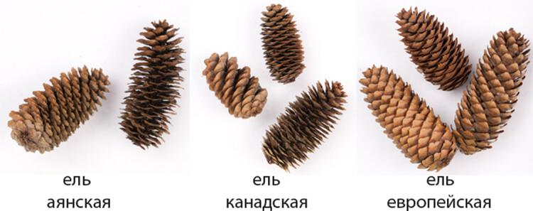 Как сделать ежика из шишки: различные варианты поделки ezhik iz shishek 2