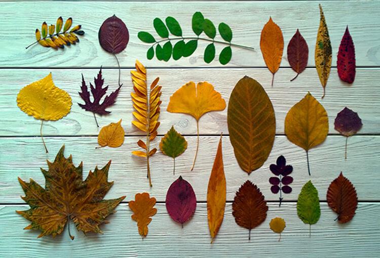 Как сделать композицию из листьев своими руками