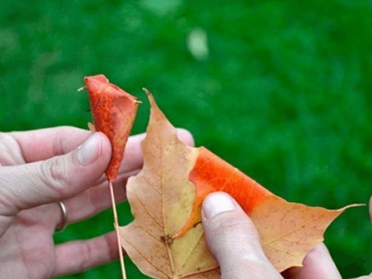 Интересные и красивые поделки из осенних листьев в садик и школу osennie podelki iz listev 63
