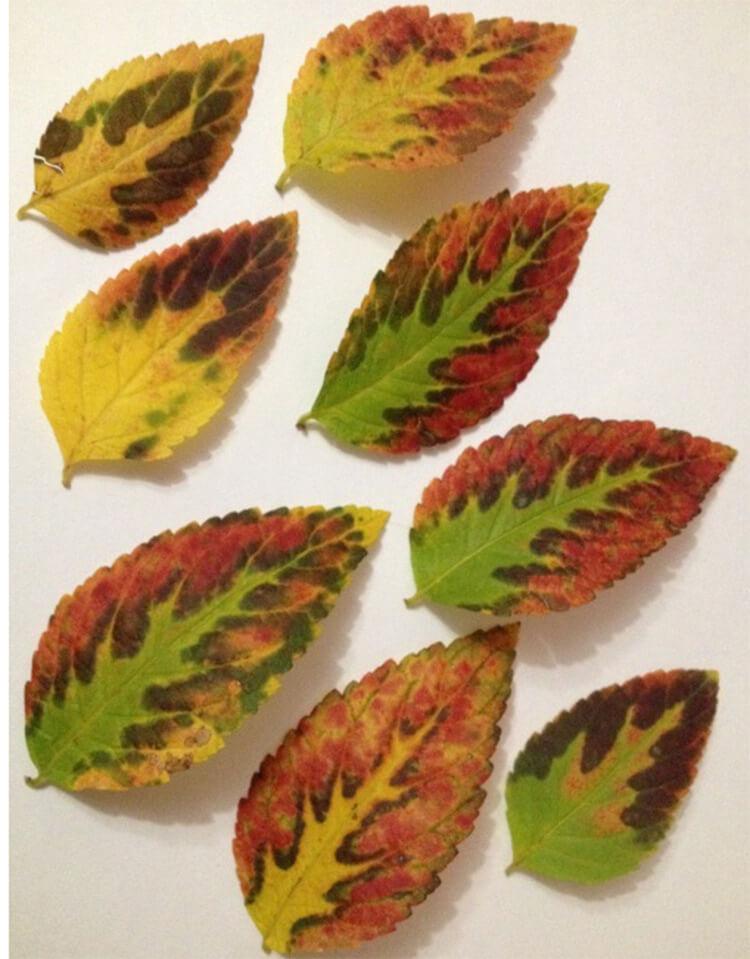 Интересные и красивые поделки из осенних листьев в садик и школу osennie podelki iz listev 80