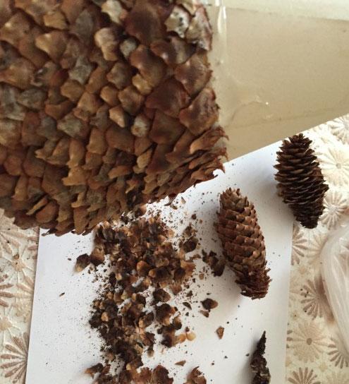 Поделки из природного материала: что можно сделать на осеннюю тематику podelki iz prirodnogo materiala 137