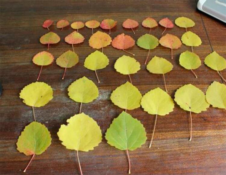 Красивые и оригинальные поделки в школу из природных материалов podelki iz prirodnogo materiala 77