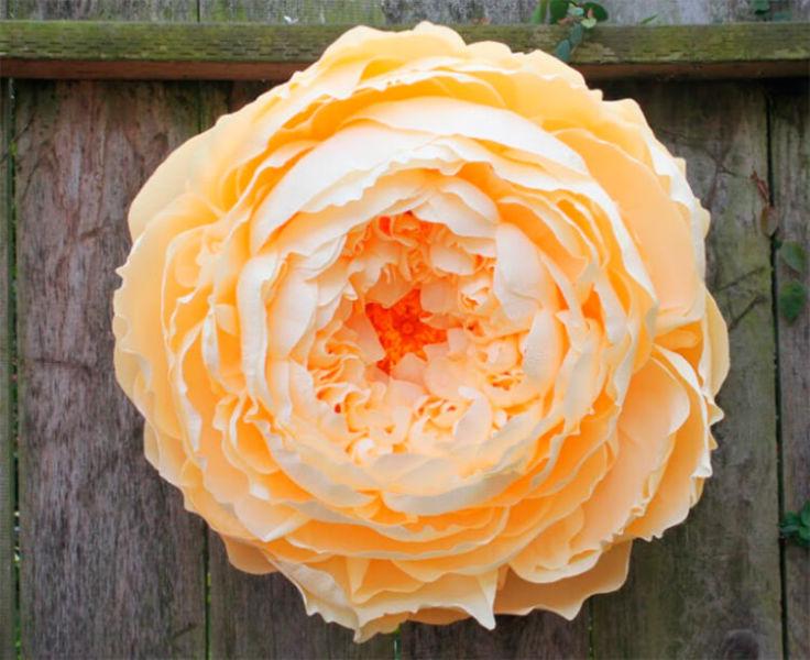 Пион своими руками: как сделать цветок различными способами kak sdelat piony svoimi rukami 153