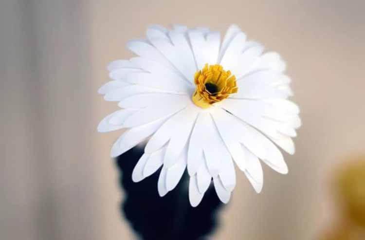 Делаем цветок ромашка своими руками из различных материалов romashki svoimi rukami 2