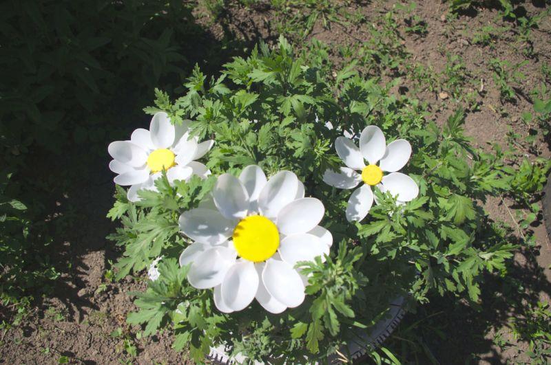 Делаем цветок ромашка своими руками из различных материалов romashki svoimi rukami 207