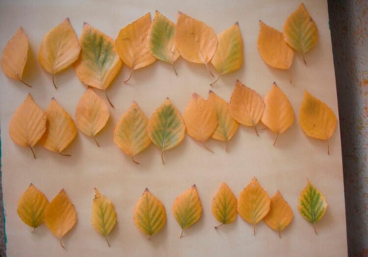 Поделки из различных природных материалов в школу и сад podelki iz prirodnogo materiala na temu osen 5