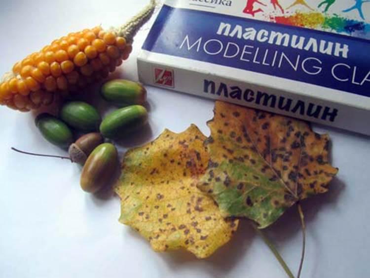 Животные из овощей и фруктов для сада и школы своими руками podelki zhivotnyh iz prirodnogo materiala svoimi rukami 10