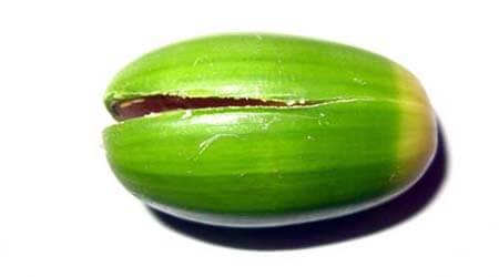 Животные из овощей и фруктов для сада и школы своими руками podelki zhivotnyh iz prirodnogo materiala svoimi rukami 12